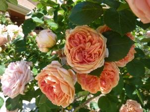 Rose Emporiam